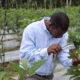 José Oneydo carefully inspects his crops in Dominican Republic
